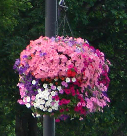 Hanging Flower Basket Program